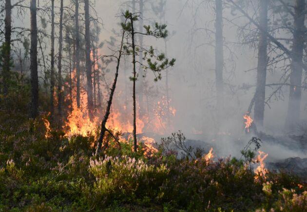 En skogsbrand har brutit ut nära svenska gränsen i Norge.