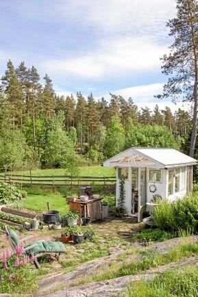 Birgittas växthus är det minsta av trädgårdens tre växthus. Här odlas aubergine, physalis och fikon. Utanför växer vitlök, arabella, vårsköna, lupiner och ormbunke.