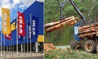 Statlig skog i Belarus blir möbler – hos Ikea