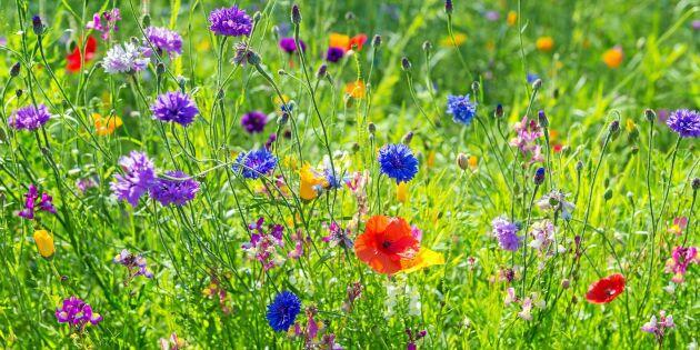 Öppen trädgård - nu är sista chansen för din anmälan