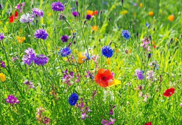 Underbara trädgårdar över hela Sverige visar upp sig den 21 juli - var med du också!