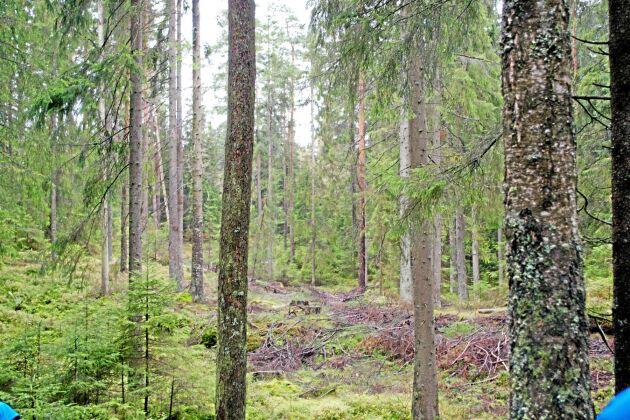 Det svenska skogsbruket är uthålligt och en kolsänka, menar Anders Lindroth, professor i naturgeografi vid Lunds universitet. Men på kort sikt kan metoden att kalhugga få negativa konsekvenser.