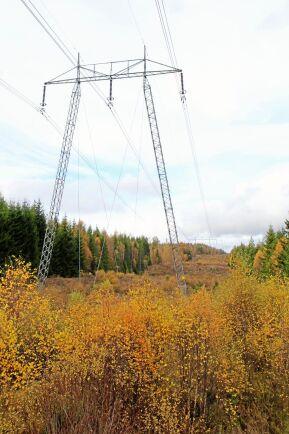 Kraftledningsgator kan utgöra livsmiljöer för ett stort antal arter som annars är undantryckta i landskapet.