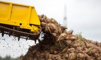 Franska odlare får dispens för neonikotinoider