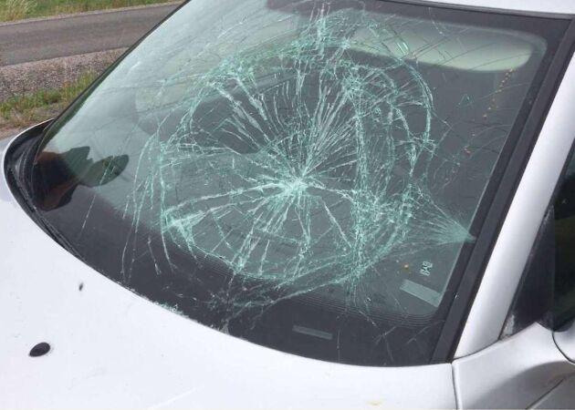 Minkuppfödare krossade rutan på aktivisternas bil. Aktivisterna misstänks i sin tur för skadegörelse och olaga intrång.