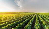 Sojabönor från USA ökar kraftigt