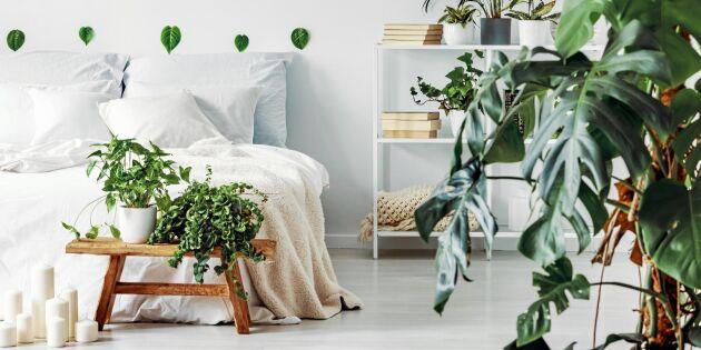 Så inreder du ditt sovrum med gröna växter - här får du råd att utgå ifrån