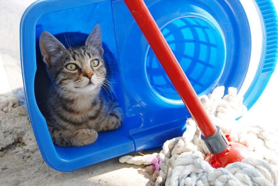 Land.se tipsar om hur du kan få din katt att må bra.