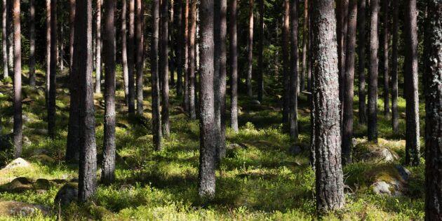 """""""Ensidig debatt risk för skogsbruket"""""""