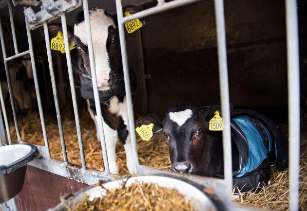 Den kommande sommaren är ett orosmoln för många mjölkbönder, efter förra årets torka.