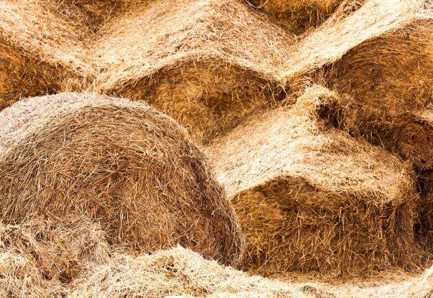Sommarens extremtorka har lett till foderbrist hos många lantbrukare.