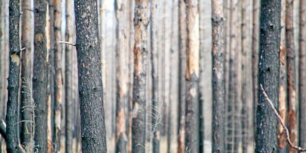 Mycket brandskog oförsäkrad