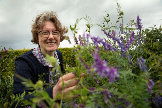 Luddvicker är en av alla växter som odlas på Nordgen, där Anna Palmé har särskilt ansvar för fodergrödor.