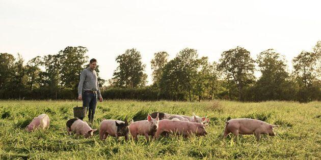 HK Scan satsar för klimatsmartare köttgårdar