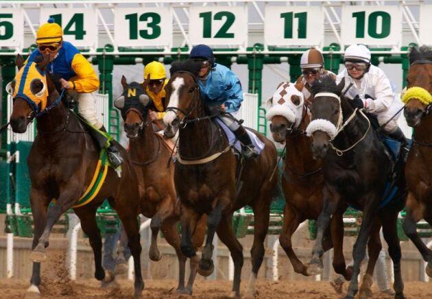 Oavsett om det är ridsport, trav eller galopp har hästföretagen svårt att rekrytera personal.