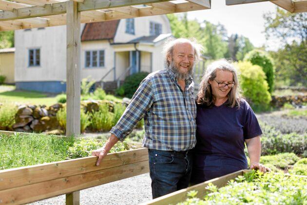 Myskmadran och de andra örterna frodas på John Söderbergs och Susanne Lundbergs hantverksmässiga odlingar i Källdalen.