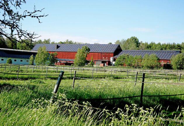 """Gårdens areal är 100 hektar. På 18 hektar odlar Skästa gård eget foder och de får råd kring hur de ska sköta odlingen av bönder i området. """"Vi har lärt oss jättemycket"""", säger Louise Haaga."""
