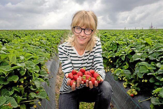 Lina Herbertsson, forskare vid Lunds universitet, har undersökt vad skillnaden är mellan jordgubbar som pollinerats ordentligt och sådana som inte har det.