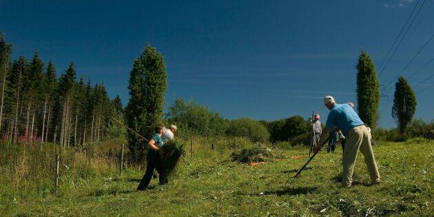 Kom i gång med slåtteräng – så odlar och sköter du den!