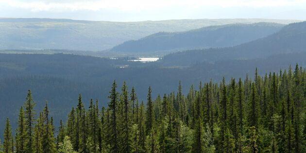 Naturskyddsföreningen söker skogsdetektiver