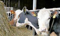 Fritt krisstöd till torkdrabbade lantbrukare