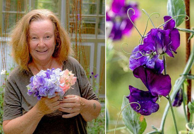 Under sommaren börjar dagen med blomfest. Cecilia Wingård plockar luktärter varje morgon.