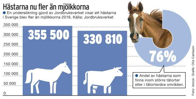 355 500 hästar är 24 690 fler än antalet mjölkkor.