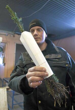 Gustav Toft visar en planta med färdigmonterat skydd.