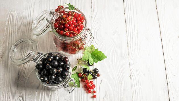 Varför inte testa att göra picklade vinbär?