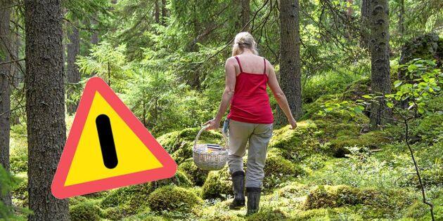 Polisens uppmaning till svampplockare som går ut ensamma i skogen
