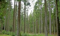 Nu tar långivarna över Norske Skog
