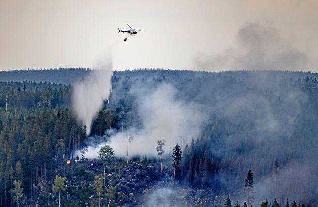 Helikopter vattenbombar en skogsbrand sommaren 2018.