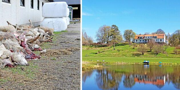 Nu har fårägarna fått nog – genomför upprop i Stockholm