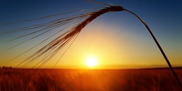 Affärsnätverk ger nya insikter till USA:s lantbrukare