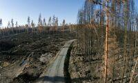 Företag riskerar miljoner i böter efter skogsbrand