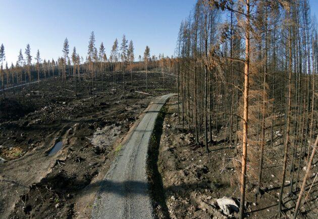 Brandfält efter den stora skogsbranden i Västmanland augusti 2014 då 14000 hektar skog till ett värde av hundratals miljoner brann upp.