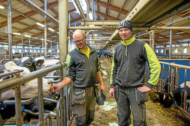 Stallet byggde bröderna om själv och stod klart 2010. De har i dag 150 kor.