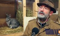 ATL TV: Han satsar på kaniner