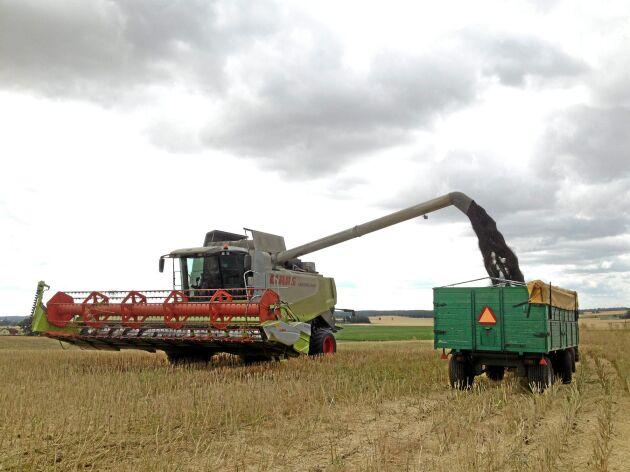 Den andel mark som är under omställning till ekologisk produktion minskade något förra året.