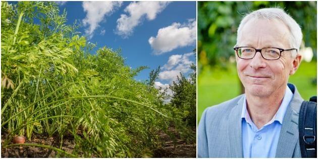 Trädgård växer starkast inom lantbruket