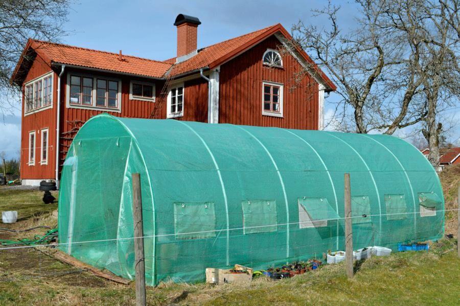 I en enkel tunnel täckt med plast blir det varmt tidigt på säsongen, liksom i ett växthus. Jag använder den uppvärmda ytan till att så grönsaker som ger tidig skörd innan tomat, gurka, paprika och annat planteras ut. Foto: Sara Bäckmo