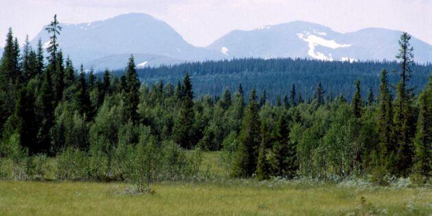 Skogsstyrelsen överklagar de fjällnära domarna