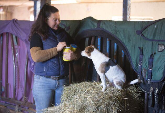 Uppmärksam på matte. Att söka möss är bland det roligaste hanhunden Bus vet. Att det sen är bra träning för det han har som uppgift som gårdshund är bara en bonus. Han håller gården gnagarfri.