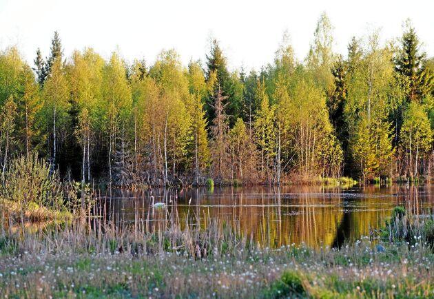 I landsbygdsprogrammet finns bland annat ersättningar för att anlägga våtmarker.