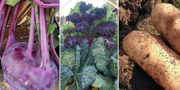 18 grönsaker som passar nordlig odling