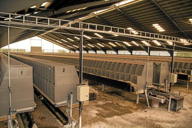 I ett tidigare köttdjursstall startade Knut Indebetou för fem år sedan sin minkproduktion. Hallen har fungerat alldeles utmärkt för ändamålet.