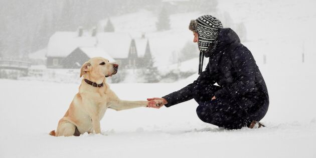 Håll hunden frisk i kylan – 7 saker att tänka på