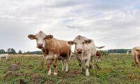 Djurhanteringen avgörande för köttet