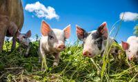 Tyskland inför märkning för djurvälfärd