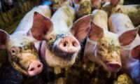 Bankers krav på djurskydd får underkänt